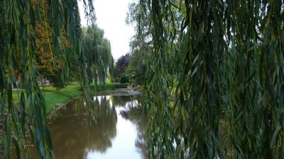 Burg Reijnderstraat Stadskanaal boom wilg water