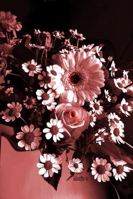Madelief bloemen in pot bruin rood planten