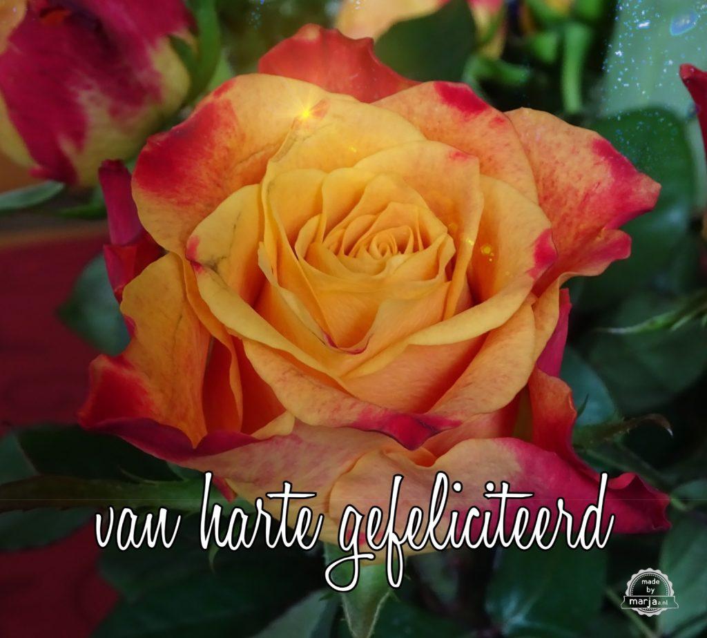 Roos gefeliciteerd